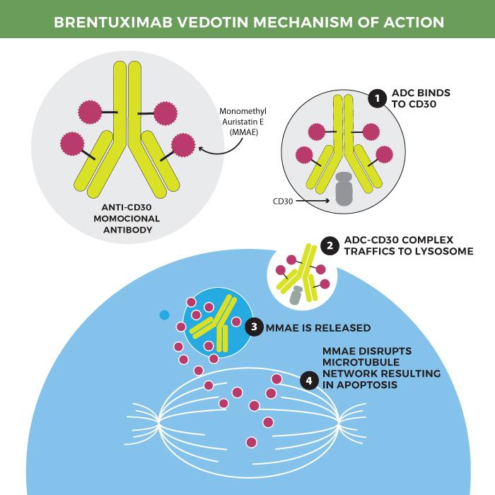 Brentuximab vedotin mechanism of action.