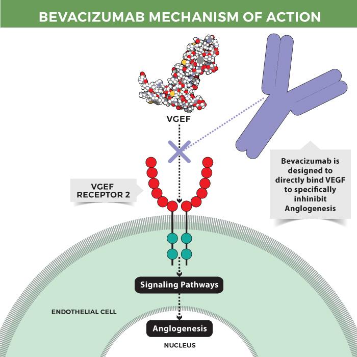 Bevacizumab mechanism of action.