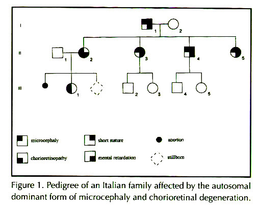 Figure 1 . Pedigree of an Italian family affected by the auiosomal dominant form of microtephaly and chorioretinal degeneration.