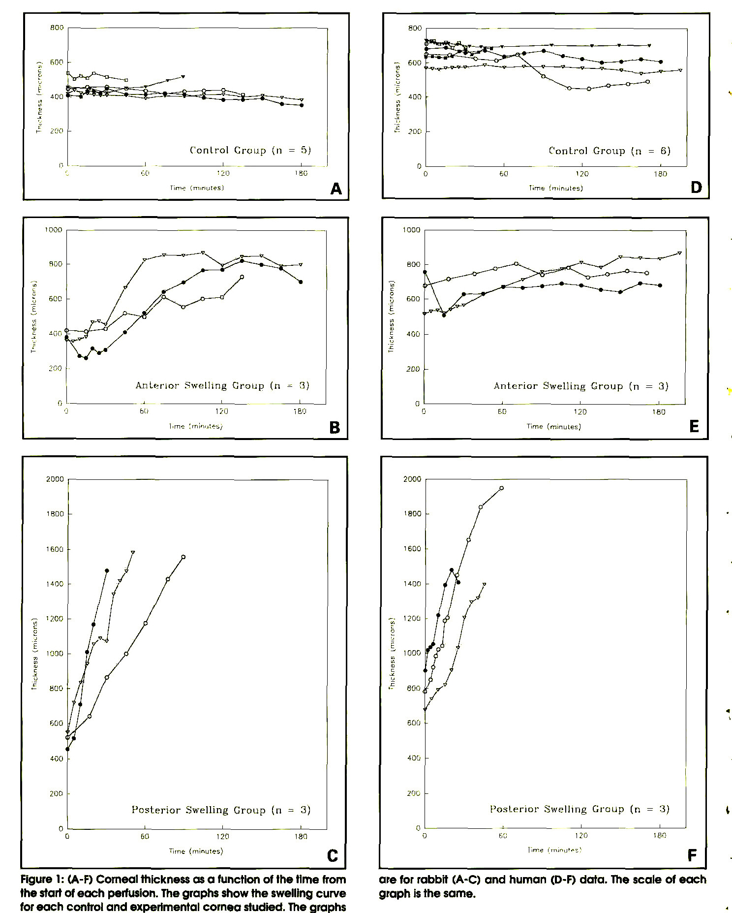Figure 1: (A-F) Corneal thickness as a function of the time from the start of each perfusion. The graphs show the swelling curve for each control and experimental cornea studied. The graphs are for rabbit (A-C) and human (D-F) data. The scale of each graph is the same.