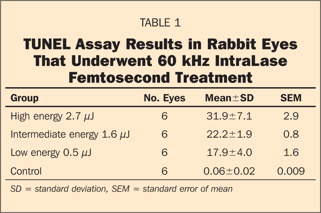 TUNEL Assay Results in Rabbit Eyes that Underwent 60 kHz IntraLase Femtosecond Treatment