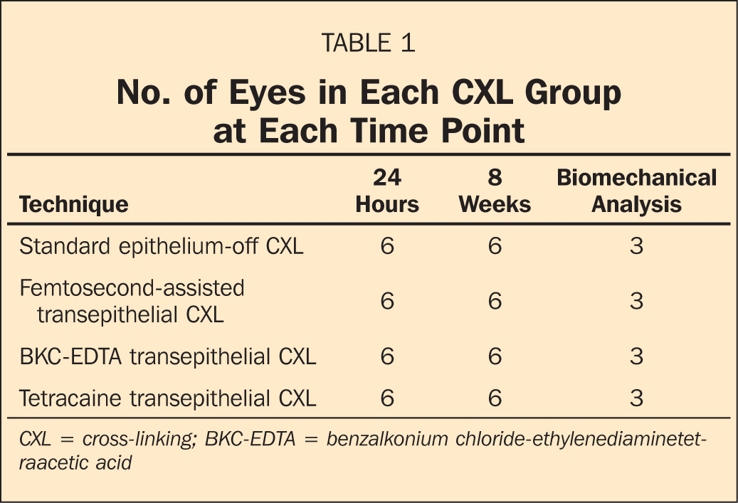 No. of Eyes in Each CXL Group at Each Time Point