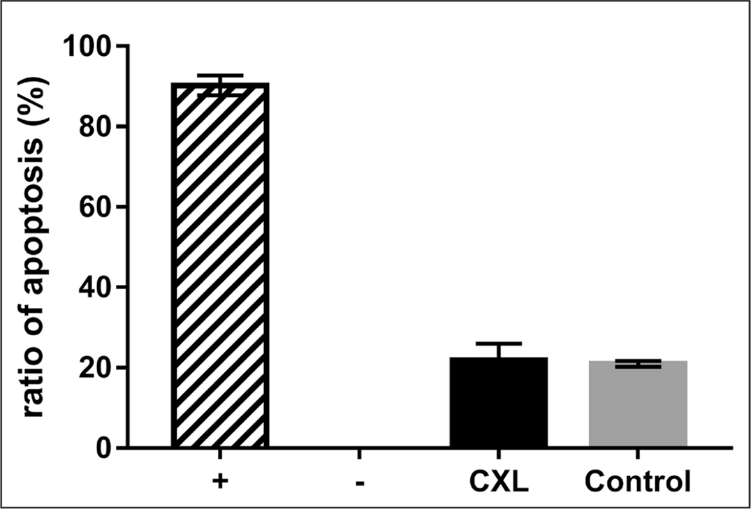 The ratios of apoptotic cells in retina of rhesus monkeys at 12 months postoperatively. CXL = corneal cross-linking; + = positive control according to the manufacturer's protocols; − = negative control according to the manufacturer's protocols
