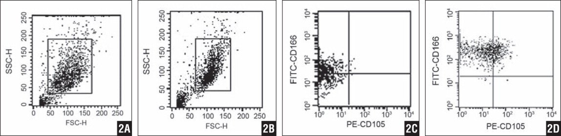 Fluorescence-activated cell-sorting analysis of chondrocytes was presented on forward/side scatter plot for primary culture (A) and after 4 passages (B). The scatter plot was set on a linear scale to indicate particle size and was used to exclude cellular debris and aggregates. The CD166-fluorescein isothiocyanate/CD105-phycoerythrin staining was detected in the primary culture (C) and after 4 passages (D) in geometrical mean fluorescence.