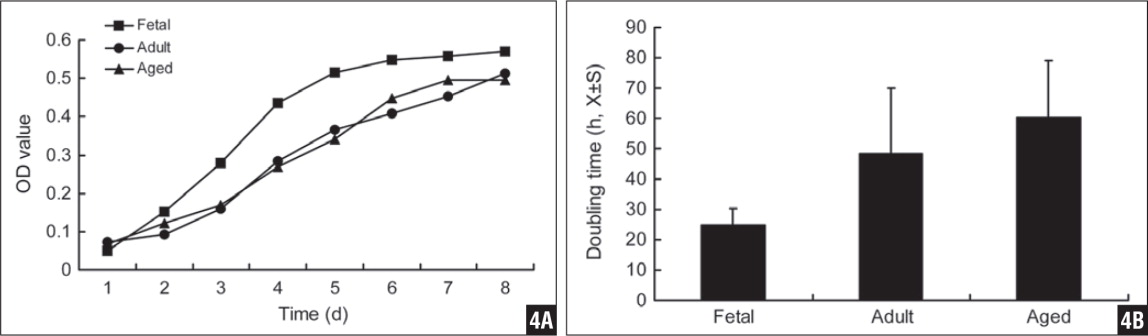 Cell growth (1 passage in culture) was measured for mesenchymal progenitor cells from different age groups, indicating a higher grown rate for fetal mesenchymal progenitor cells (A). Cell doubling time was calculated for mesenchymal progenitor cells from different groups of patients, showing a lowest double time (Kruskal-Wallis test, P=.001) (B).