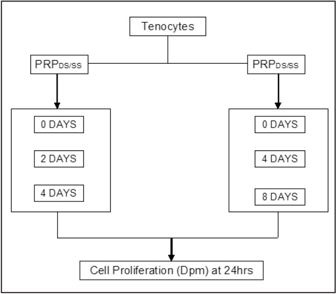 Experimental setup. Abbreviations: Dpm, disintegrations per minute; PRPDS, platelet-rich plasma derived from a double-spin process; PRPSS, platelet-rich plasma derived from a single-spin process.