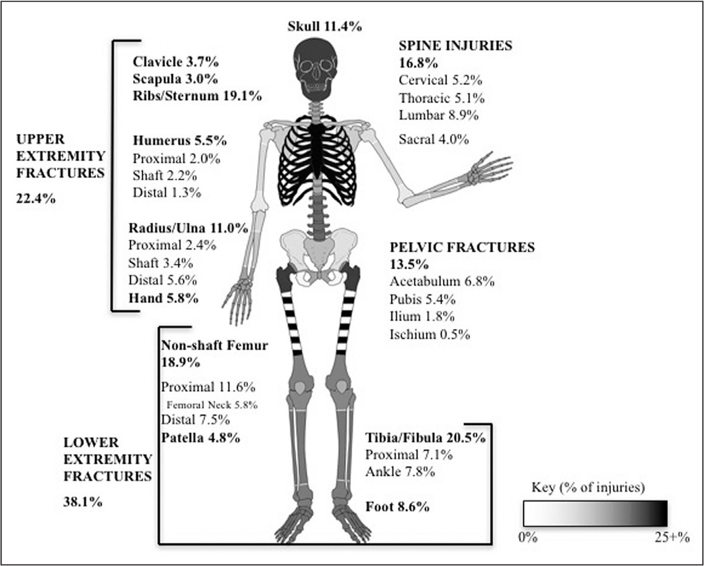 Schematic representation of percentages of adult patients (18 years and older) with a femoral shaft fracture with an incidence of associated bony injuries in different regions of the skeleton. Darker shadings in gray scale correspond with higher frequencies of associated injuries.