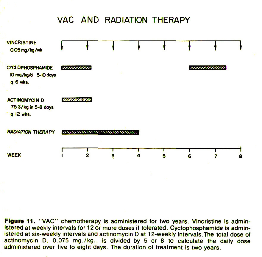 "Figure 11. ""VAC"" chemotherapy is administered for two years. Vincristine is administered at weekly intervals for 1 2 or more doses if tolerated. Cyclophosphamide is administered at six-weekly intervals and actinomycin D at 1 2-weekly intervals. The total dose of actinomycin D, 0.075 mg./kg., is divided by 5 or 8 to calcúlate the daily dose administered over five to eight days. The duration of treatment is two years."