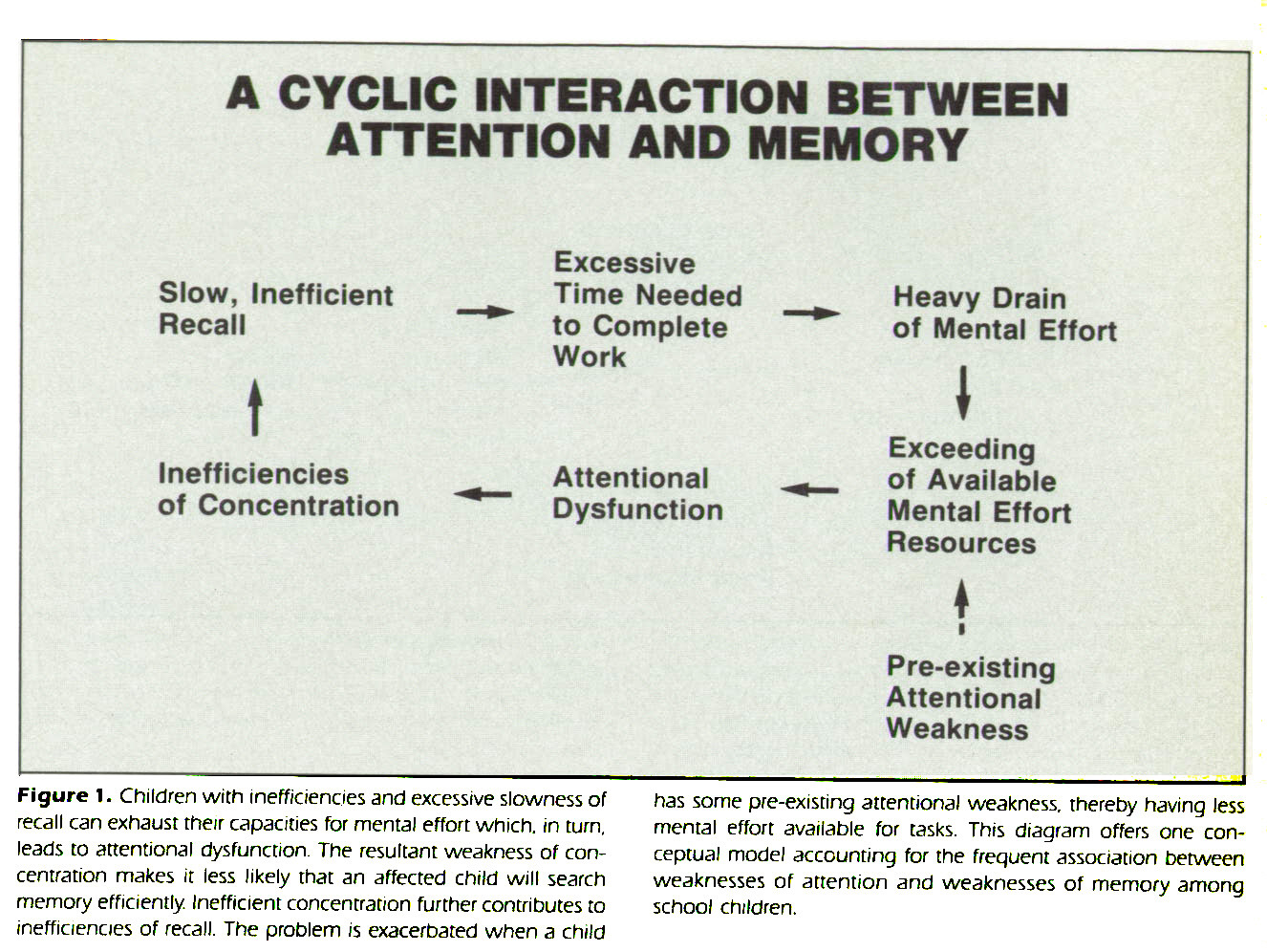 Figure 1. Children with inefficiencies and excessive slowness of recall can exhaust their capacities for mental effort which, in turn, leads to attentional dysfunction. The resultant weakness of concentration makes it less likely that an affected child will search memory efficiently. Inefficient concentration further contributes to inefficiencies of recall. The problem is exacerbated when a child has some pre-existing attentional weakness, thereby having less mental effort available for tasks. This diagram offers one conceptual model accounting for the frequent association between weaknesses of attention and weaknesses of memory among school children.