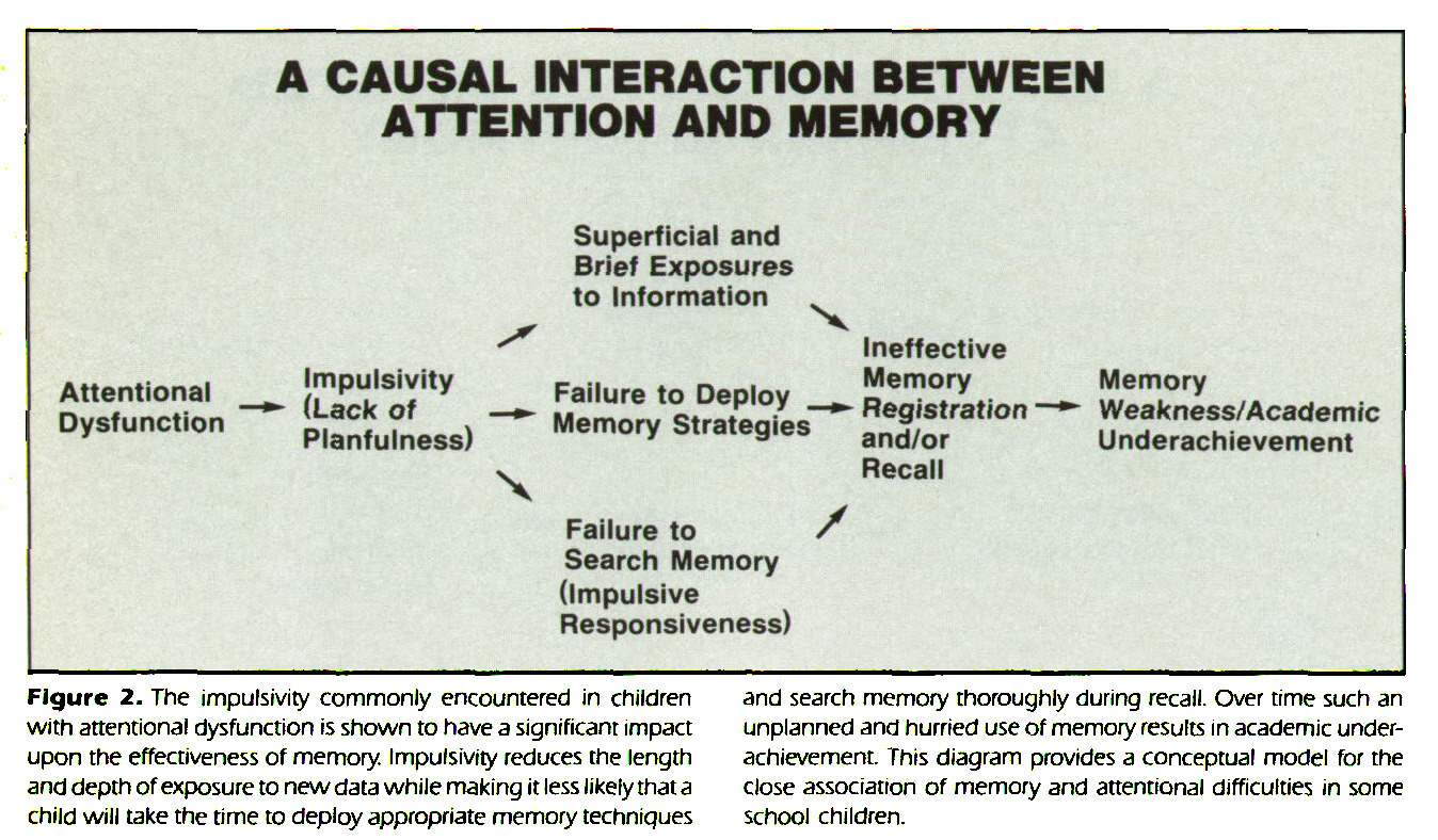 Figure 2. The impulsivity commonly encountered in children with attentional dysfunction is shown to have a significant impact upon the effectiveness of memory. Impulsivity reduces the length and depth of exposure to new data while making it less likely that a child will take the time to deploy appropriate memory techniques and search memory thoroughly during recall. Over time such an unplanned and hurried use of memory results in academic underachievement. This diagram provides a conceptual model for the close association of memory and attentional difficulties in some school children.