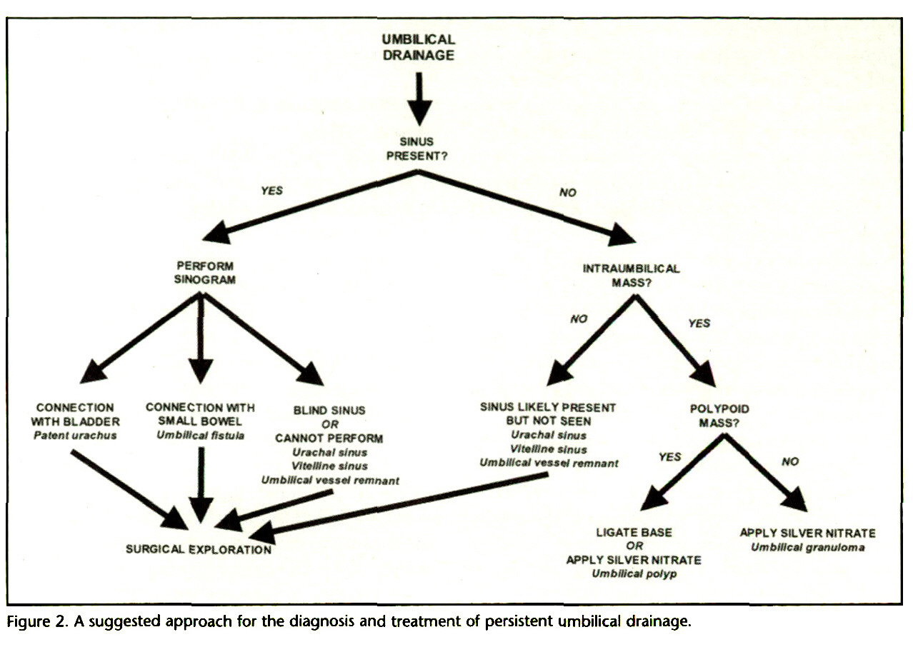 Figure 2. A suggested approach for the diagnosis and treatment of persistent umbilical drainage.
