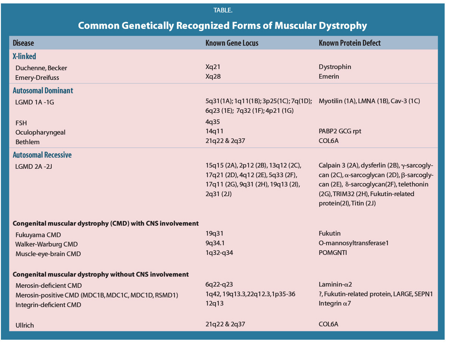 TABLE.Common Genetically Recognized Forms of Muscular Dystrophy