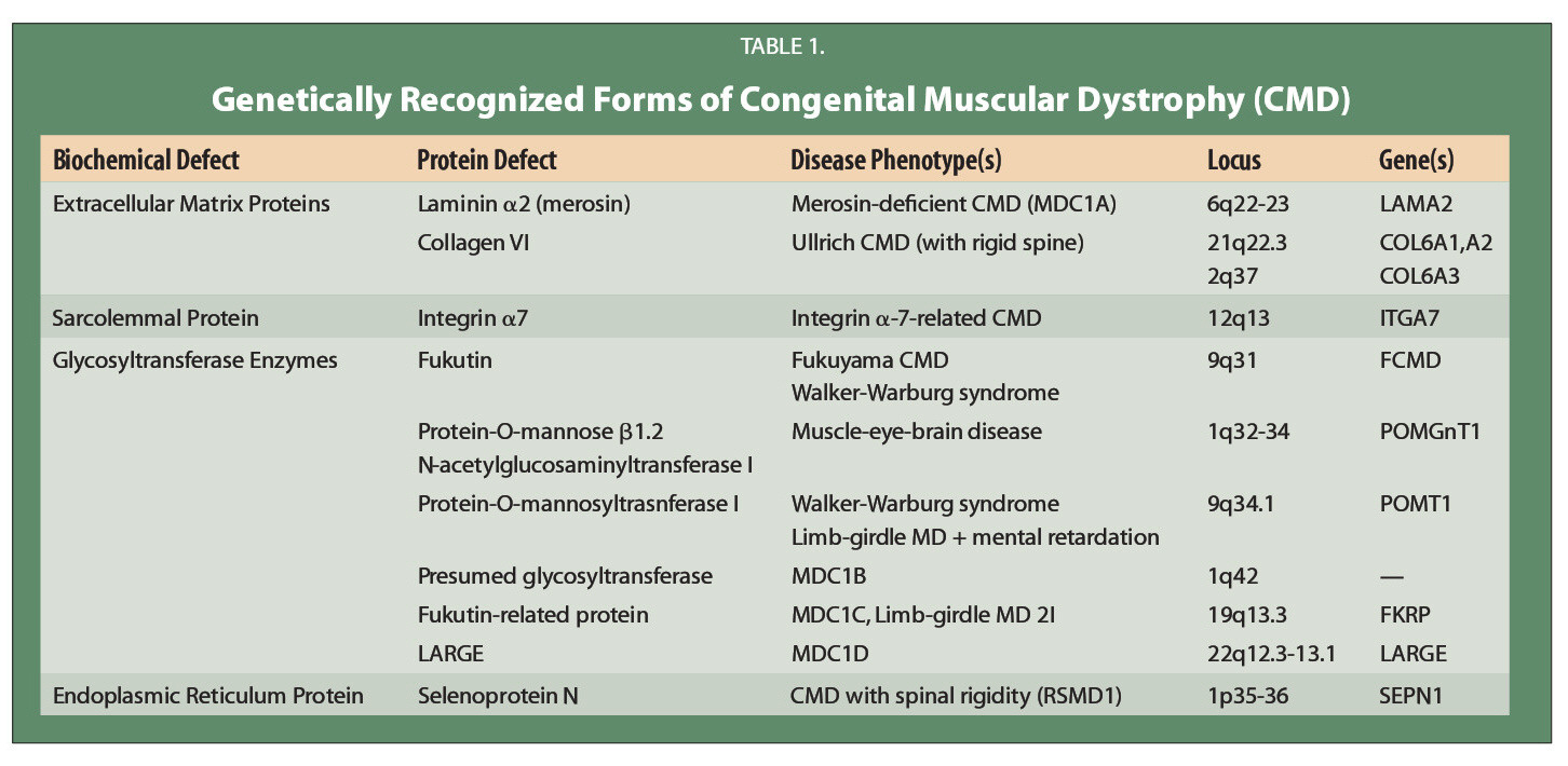 TABLE 1.Genetically Recognized Forms of Congenital Muscular Dystrophy (CMD)