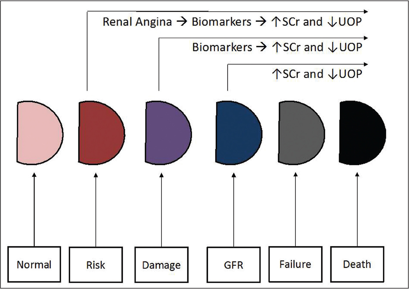 In the timeline of kidney injury, changes in SCr and UOP are late. Biomarker changes may detect incipient injury before changes in GFR can be detected. Renal angina may identify patients at risk even earlier. GFR, glomerular filtration rate; SCr, serum creatinine; UOP, urine output.