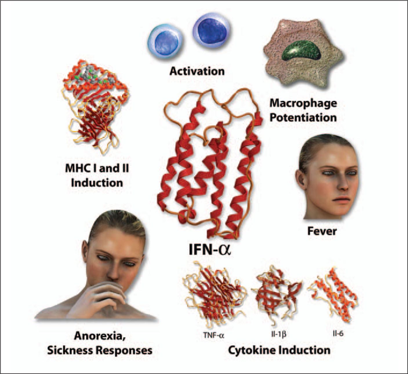 Interferon Alpha (IFN-alpha) Is a 189 Amino Acid Protein that Is Made Primarily by Plasmacytoid Dendritic Cells and Mononuclear Phagocytes. Viral Nucleic Acids Are the Strongest Stimulator of IFN-alpha Production. IFN-alpha Produces Fever and Other Sickness Responses. It also Induces Production of MHC I and II Molecules, Potentiates Macrophages, Stimulates the Development of Helper T Cells Along the TH1 Pathway, and Induces the Production of Inflammatory Cytokines (TNF-alpha, IL-1-Beta, and IL-6). A Note from the Editors: All Illustrations in This Article Have Been Created by George I. Viamontes, MD, PhD, for Specific Use in This Issue of Psychiatric Annals.