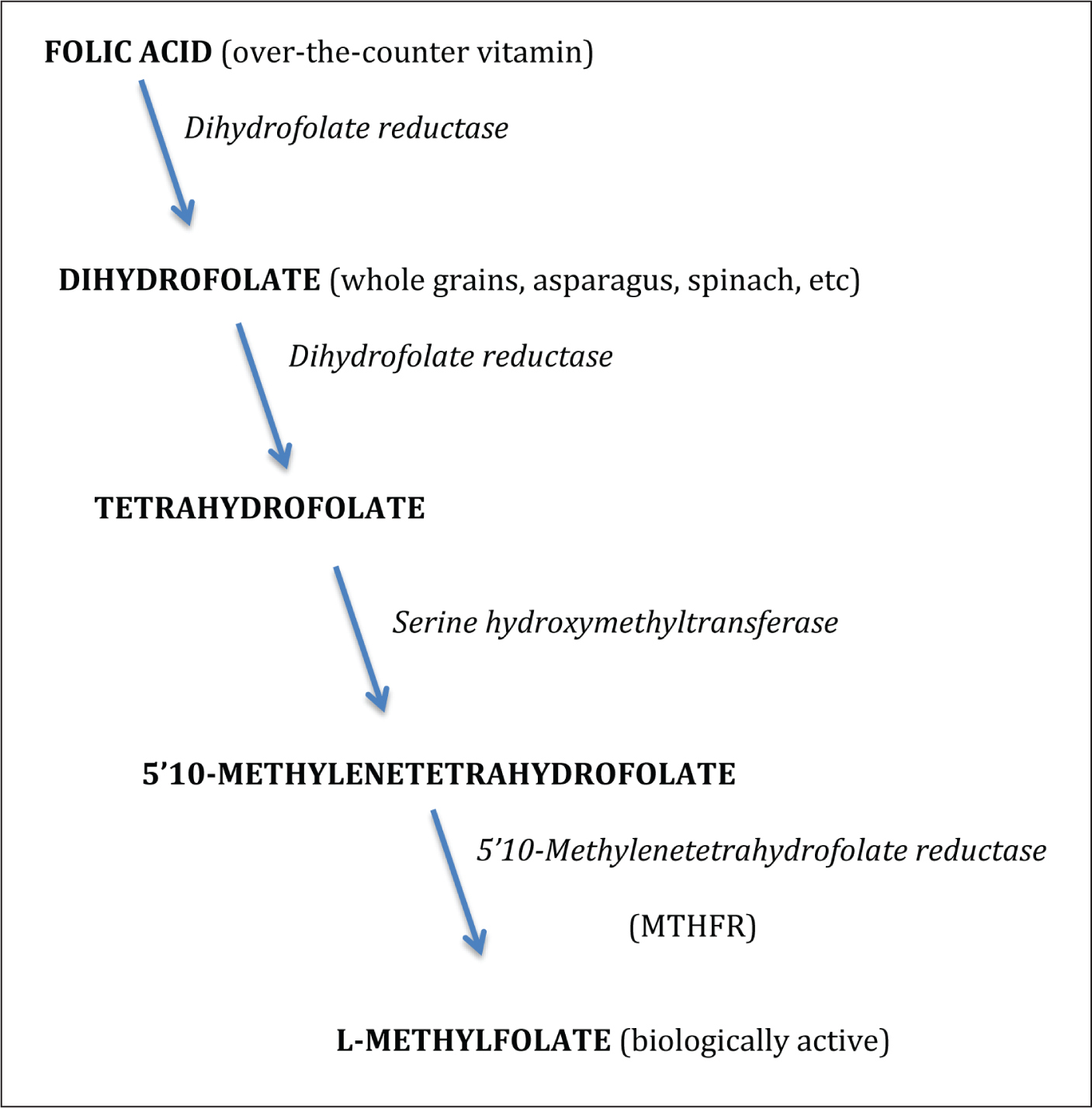 Enzymatic reactions that convert the biologically inactive folic acid or dihydrofolate to the usable, biologically active L-methylfolate.Image courtesy of Pat Rabjohn, MD, PhD.