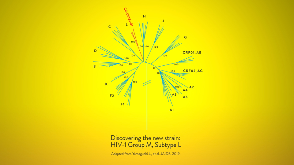 A photo of HIV-1 group M subtype L