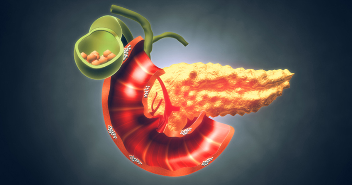 anatomy of a pancreas